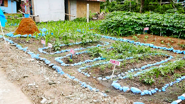 A communal herb and vegetable garden grows in Belle III as contingency food source should they be cut off from main roads by floods.